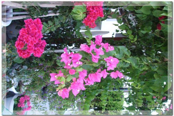 samos-2010-10256CD1D014-939F-9196-61D6-41B8F388BBDB.jpg