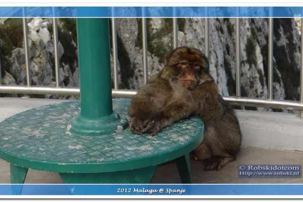 2012-malaga-082000A3C0E5-7D52-A731-9C2D-3EEFC32FC44A.jpg