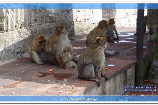 2012-malaga-0852B9FB834D-26A5-1614-5059-B39AC68BFF50.jpg
