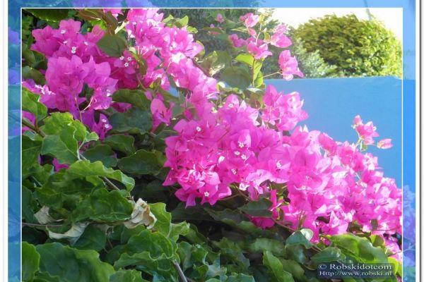 2012-rhodos-065052C5861-5035-E8E5-C617-B75C096BDDCB.jpg