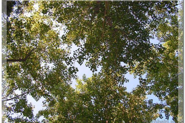 2006-italie-1652BAFCDE4-A42D-8840-74EE-084D62B1ED21.jpg
