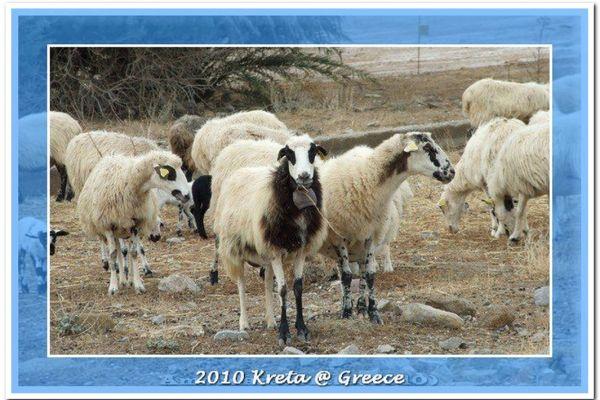 2010-kreta-13329B91473-842E-739A-4F0A-7F9DC9EF4406.jpg